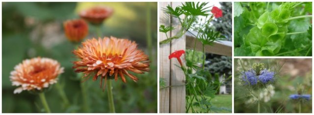 perennials-collage-4