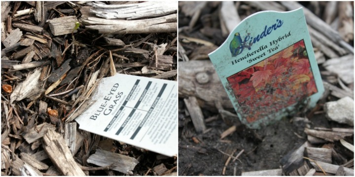 plant tags for blue-eyed grass and coral bells