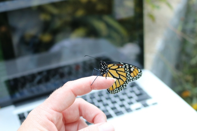 Monarch butterfly resting on a pointer finger in front of a laptop.