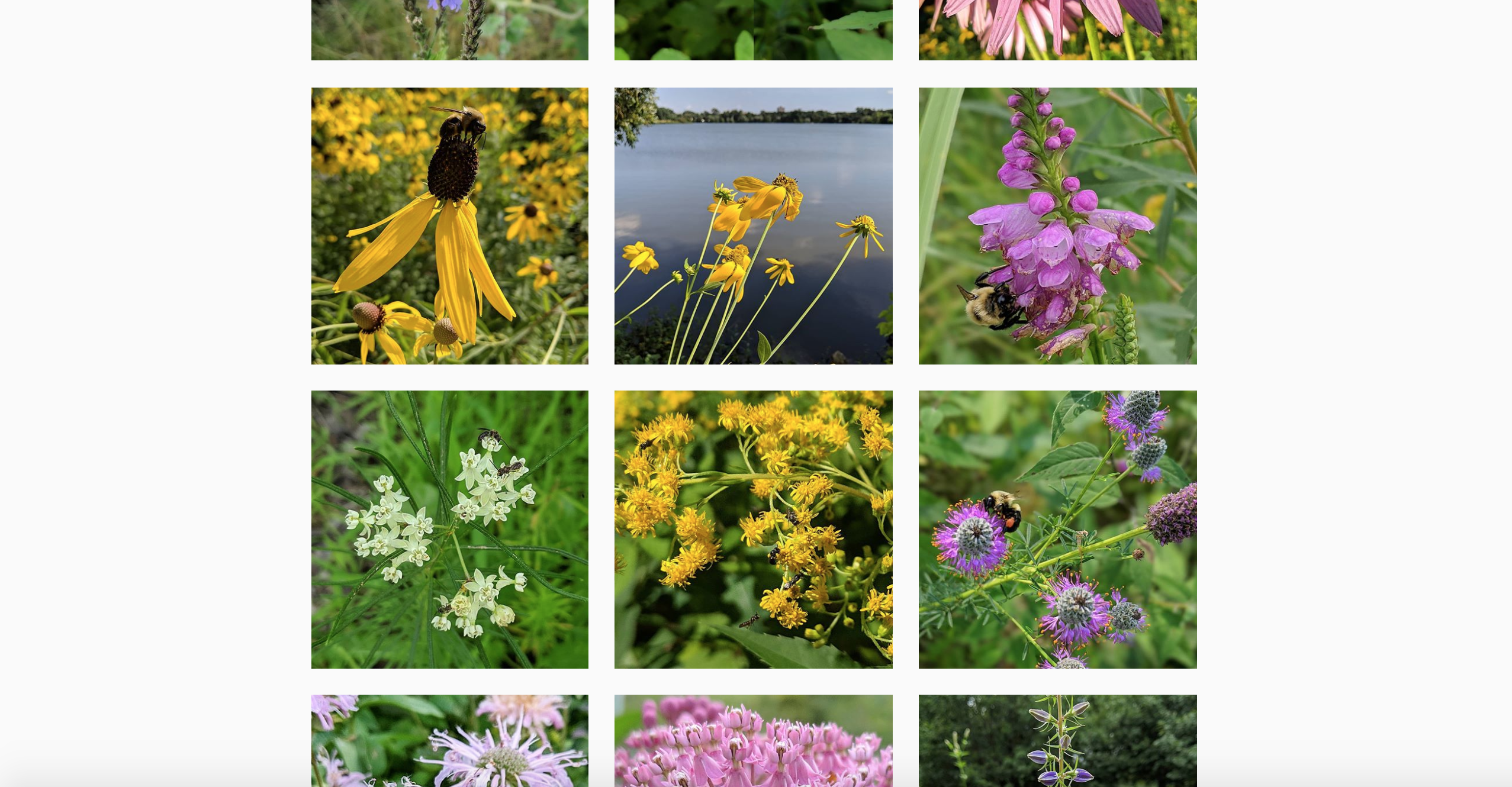 Screengrab of the Big River Big Woods Instagram feed during the summer, with photos of blooming flowers.