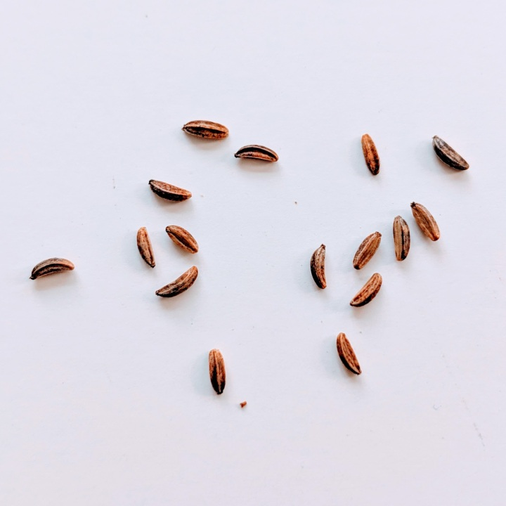 15 scattered brown, oblong seeds.